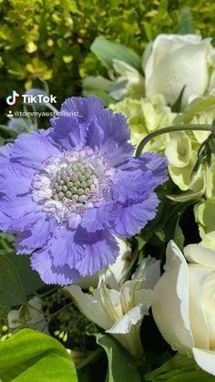 Flower Centerpieces, Flower Arrangements, White Flowers, Beautiful Flowers, Casket Sprays, Sympathy Flowers, Mind Blown, True Colors, Art Inspo