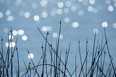 """Sunlight Dances"" photo by Penny Meyers.  Fine art prints and greeting cards from Fine Art America."