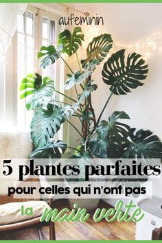 You possibly can by no means preserve your vegetation alive? Listed here are 5 vegetation simple to take care of, even for the much less skilled gardener! Organic Gardening, Gardening Tips, Indoor Green Plants, Decoration Plante, Pot Plante, Foliage Plants, Green Life, Horticulture, Houseplants