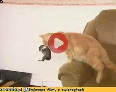 Królicza mama « Koty « Śmieszne filmy o zwierzętach - śmieszne koty, śmieszne psy. Zoomia.pl :: Zoomia pl