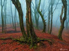A Misty Invitation  Landscapes photo by larsvandegoor http://rarme.com/?F9gZi