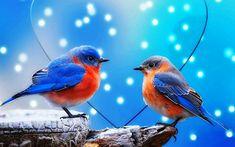 fonds d'écran oiseaux