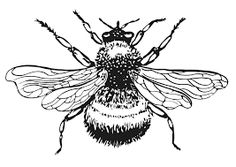 Image result for printable bumble bee pictures