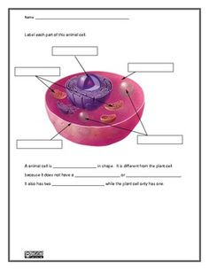 Plant and Animal Cell Worksheet (Homeschool Science) Science Resources, Science Lessons, Life Science, Science Ideas, Science Education, Educational Activities, 7th Grade Science, Middle School Science, School Fun