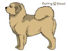 Furry Paws // WCH Kip's Honeykiss [3STM 17HH 1.465] 5.3 502 *BoB*'s Kennel