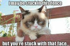 funny cat pictures grumpy cat Source by kadidiezahnfee videos wallpaper cat cat memes cat videos cat memes cat quotes cats cats pictures cats videos Grumpy Cat Quotes, Funny Grumpy Cat Memes, Cat Jokes, Funny Animal Memes, Funny Cats, Funny Animals, Funny Humor, Funny Quotes, Cat Humour