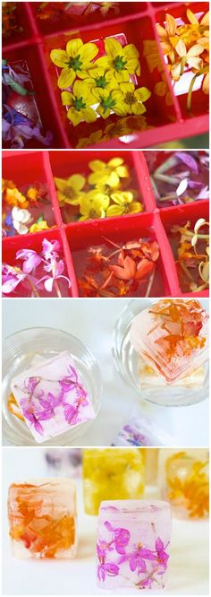 HowTo Make Edible Flower Ice Cubes / http://www.himisspuff.com/edible-flowers-wedding-ideas/5/