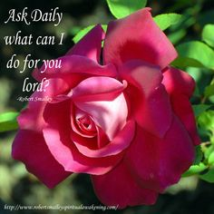"""Ask Daily.""""What can I do for you Lord? Spiritual Awakening Quotes, What Can I Do, Pretty Flowers, Bella, Red Roses, Nature, Plants, Instagram, Google"""