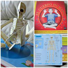Free nomenclature cards montessori esqueleto