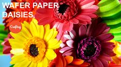 Make a Wafer Paper Daisy | Cake Decorating Tutorial with Kara Andretta
