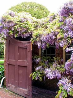 Wisteria: I want to cover our back fence with it to cover up the back neighbors' yards. Looks so cozy!