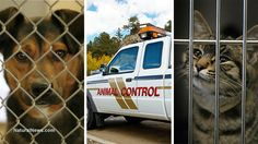 Animals Held For Ransom At Local Shelters! - http://www.pawsforpeeps.com/animals-held-for-ransom-at-local-shelters/