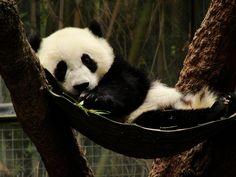 Yun Zi by snoorez, via Flickr