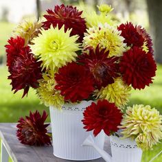 Dahlia Fiery Dinnerplate Mix. Punch up the color in your garden this summer with this vibrant mix of dinnerplate dahlias.