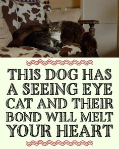 This Has A Seeing Eye Cat And Their Bond Will Melt Your Heart! <3 <3