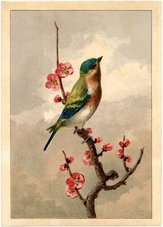 Free Bird Picture with Blossoms for decoupaging, stenciling, etc. lots of pretty vintage pictures