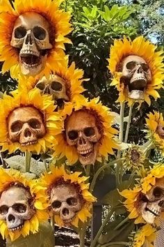 Create a mamorable Halloween decorations with our Scary Sunflower Skull! Perfect for outdoor decorations, as well as indoor decorations. #Halloween, #Halloween party, #Halloween decorations, Halloween decoration ideas Halloween Decorations Apartment, Creepy Halloween Decorations, Skeleton Decorations, Halloween Party Themes, Cheap Halloween, Halloween Skull, Scary Halloween, Halloween Crafts, Outdoor Decorations
