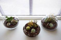Centros de mesa con crasas y cactus | Decorar tu casa es facilisimo.com