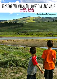 Planning a Yellowstone vacation for your family? Get our best tips for viewing animals with kids in Yellowstone National Park. #planningfamilyvacation #familyvacations