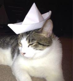 Pinterest, meet my cat Meow. cute cats