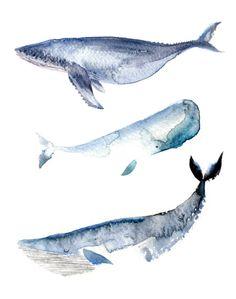 watercolour whales blue whale humpback whale sperm whale