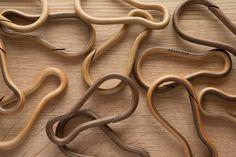 Hobowood wooden carabiners made of 17 layers of wood. walnut, oak, birch,zebra, teak, cherry.