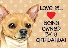 Owned by a chi