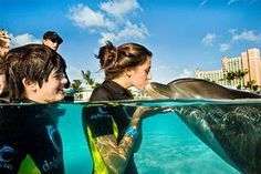 Yes, I want to kiss a dolphin right on the mouth.