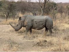 World Rhino Day: September 22 #saverhinos  #southernskyadventures #rhinos #africa #safari #africainyourwildestdreams End Of The World, Countries Of The World, Table Mountain, Kruger National Park, Savannah Chat, South Africa, Safari, Wildlife, Elephant