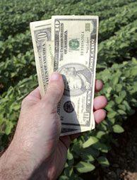 5 Steps to Writing a Farm Grant - Hobby Farms #beekeepinggrants