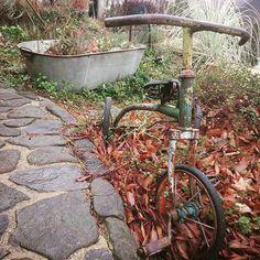 この間の極寒から立ち直れない植物たちはこの雨でもうグダグダ…来週のお天気が気になる~ #グダグダガーデン#復活願う#古いモノと暮らす#三輪車#タライ#ナチュラルガーデン
