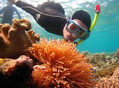 5 Best Travel Dive Sites in Australia   As we all know Australia is considered as one of the most suited travel destinations for adventure tourism and the country is home to some of the most amazing adventure spotand activities in the World. People engage in various adventure activities in Australia and there are specific spots for each and every adventure activities. One of the major adventure activity in Australia is diving and there are various places which are considered perfect for…