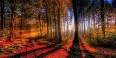 Let Your Light Shine Through (Hidden World Wonders)