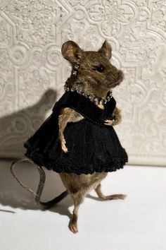 Taxidermy Mouse Little Black Dress by sparrowsongs on Etsy, $125.00