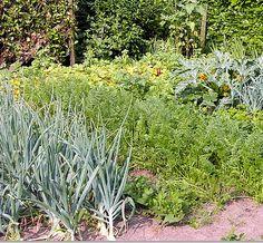 Combinatieteelt van groenten en planten die positieve invloed hebben op elkaar of elkaar verzwakken