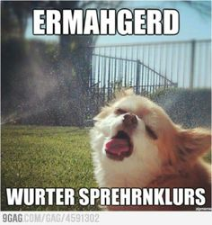 lol, water-sprinkler doggie