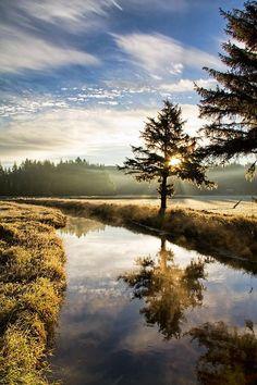 Morning Reflections ~ North Bend, Oregon © Patricia Davidson
