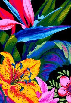 Let's Go Abstract Framed Art Print by Vikki Salmela - Vector Black - Image Deco, Tropical Art, Pattern Art, Framed Art Prints, Creative Art, Flower Art, Canvas Wall Art, Art Projects, Illustration Art