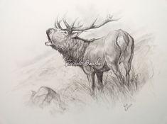 Roberto Bianchi, art animalier, pittore paesaggi, fauna selvatica, quadri…