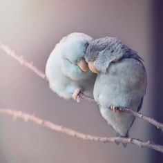 Dreamy Photos of Parrotlet Birds by Rupa Sutton. - Pets World Amazing Animals, Animals Beautiful, Cute Birds, Pretty Birds, Cute Creatures, Beautiful Creatures, Animals And Pets, Funny Animals, Nature Animals