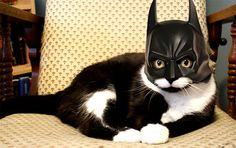 Batcat or Catman?