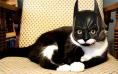 Miau, Im your CatFather