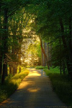 Bar Harbor, Maine  A road leading to the shore under a canopy of trees is bathed in the golden light of a Bar Harbor, Maine sunrise.