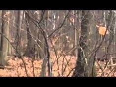 Bigfoot Sighting in Southern Ontario | Bigfoot NOW!
