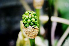 Foxografia | Kinga Joanna Rogowska: Zielono mi