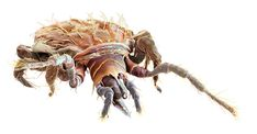 GAMASELLUS Animal Skeletons, Bugs And Insects, Creature Design, Cool Art, Fun Art, Macro Photography, Predator, Wildlife, Creatures