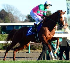 ヴェルデグリーン Verde Green (JPN) 2008 Ch.h. (Jungle Pocket (JPN)-Lady Derby (JPN) by Special Week (JPN) 1st American Jockey Club Cup (JPN-G2,2200m,Nakayama)