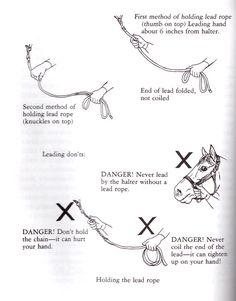 horse safety holding lead