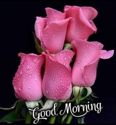 Cute Good Morning Images, Good Morning For Him, Good Morning Nature, Good Morning Images Flowers, Good Morning Texts, Good Morning Messages, Morning Pictures, Funny Morning, Morning Pics