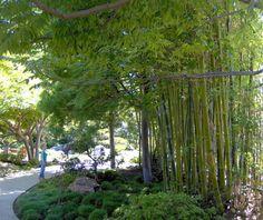 Bamboo Garden Design on Garden Design Landscape Patiothe Best Garden Design Landscape